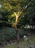 Buen precio en el Jardín de Luz LED GU10 IP65