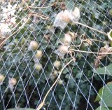 2016新しい反鳥の網、HDPEの鳥の網、プラスチックはネットを編んだ