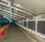 Maison de la volaille avec un ensemble complet de matériel agricole de poulet