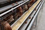 フルオートマチックの養鶏場の層の鶏のケージ装置システム