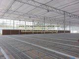 Sistema del banco de la casa verde de flor y de establecimiento vegetal