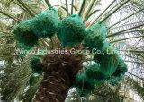 Горячие продажи в Mideast! ! 80X100см, 70x90см зеленый моно нити накаливания HDPE Дата Дата дерева для рук мешок
