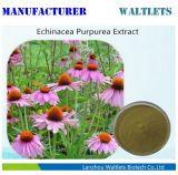 Het professionele Uittreksel van Echinacea Purpurea van de Fabrikant met Zuur Chicoric