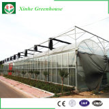 Invernadero del vidrio de flotador de la estructura de acero para la granja