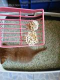 De gemakkelijke Schone en Tofu van de Controle van de Geur Draagstoel van de Kat