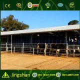 La estructura de acero de la agricultura de la vaca vaca derramada Granja