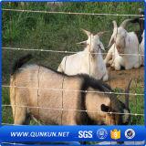 Rete fissa ISO9001-2008 del bestiame galvanizzata protezione dell'azienda agricola della mucca