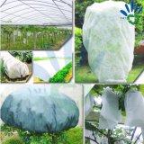 EcoのNonwoven友好的な紫外線扱われた木の保護カバー白いPP
