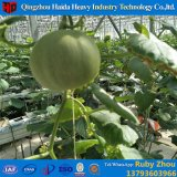 Used&Nbsp; Hydroponic&Nbsp; Systems&Nbsp; Greenhouse&Nbsp; Motor