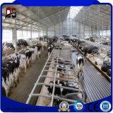 A exploração agrícola de aço pre projetada verteu para a vaca/porco/gado