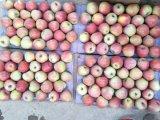 Unbagged fresco Qinguan tamaño 138-198 Apple a Bangladesh