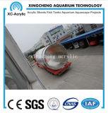 Acquario materiale acrilico personalizzato