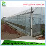 고품질 큰 크기 다중 경간 농업 상업적인 온실