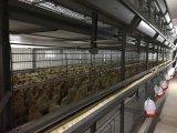 鋼鉄プレハブの容易鶏の家禽の家をアセンブルする