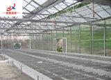 Growing de flor en el Seedbed del invernadero
