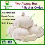 10 kg de peso 20kg Embalaje bolsa de malla nueva ajo fresco con blanco puro Normal El ajo de China