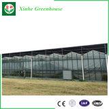 Invernadero de cristal del túnel económico de la agricultura para Growing vegetal