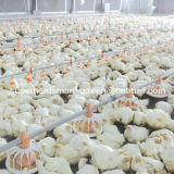 Ferme avicole chaude Equipment de Sale Automatic pour Chicken Farm