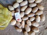 Excellent rapport qualité prix des pommes de terre fraîches Cheap