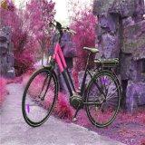 Batterie 36V 10,4Ah 26inch utilisé vélo électrique de qualité supérieure (DSR-401)