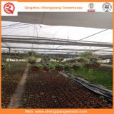 Landwirtschaft/Handelsglasgarten-grüne Häuser für Blumen