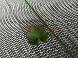 Оцинкованный расширенной металлической проволоки сетки/ Расширение стального листа