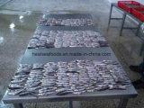 통조림으로 만드는을%s 바다에 의하여 어는 멸치