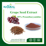Extracto CAS de Anthonyanins: 84929-27-1 planta Extraxct del extracto del germen de la uva de Proanthocyanidins el 95% el 99%