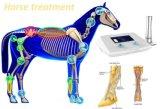 Stoßwelle-TherapieTestimonial für Pferden-proximale suspensive Ligament-Verletzungen