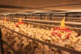 As aves domésticas pré-fabricadas da construção de aço abrigam a casa de galinha (KXD-SSB59)