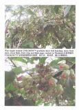 Engrais biologique d'Unigrow sur toute plantation de fruit
