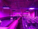 Le lampade della serra LED coltivano le piante chiare del corpo