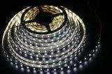 30W 300 LEDs High-Brightess W/R/G/B2835 SMD impermeável Cores Corda de LED para luzes de recordações/Mercado/decoração do Hotel
