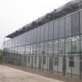 Serra agricola della serra di vetro di Venlo con i sistemi idroponici della serra