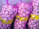 Sacchetto 100% della maglia di Raschel del PE per le cipolle, patate, altre verdure