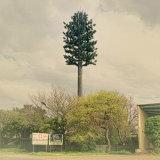 위장된 나무 통신 안테나 강철 관 탑