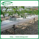 Hightechshydroponiksystem für das Gurkewachsen