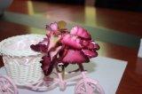Цветки/заводы Succulents высокого качества искусственние для украшения дома/офиса