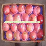 Les chinois de fruits frais de vente en gros de bonne qualité Qingguan Apple