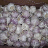 Nuovo aglio del cinese di alta qualità del raccolto