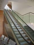 Verde de bajo ruido y la energía limpia Escaleras Mecánicas