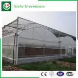農業の野菜または花のためのマルチスパンのフィルムの温室