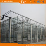 Planting를 위한 광대하게 Used Venlo Type Glass Greenhouse