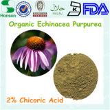 Het Uittreksel van Purpurea van Echinacea