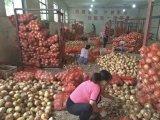 Meshbag에 있는 중국 신선한 빨간 양파