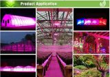 216W花LEDはライトを育てる