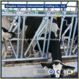 Clôture de bovins de taille différente pour le bétail de l'équipement