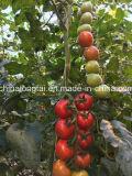 Cuerda suave y pequeña del embalaje del tomate de los PP de la especificación