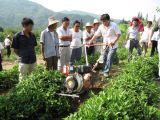 sierpe de 10HP Rotavator para la cultivación