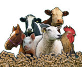 La alimentación animal de la máquina de pélets de pollo, pescado, ovejas, vacas, pato, el caballo